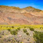 Chasing the Super Bloom 7